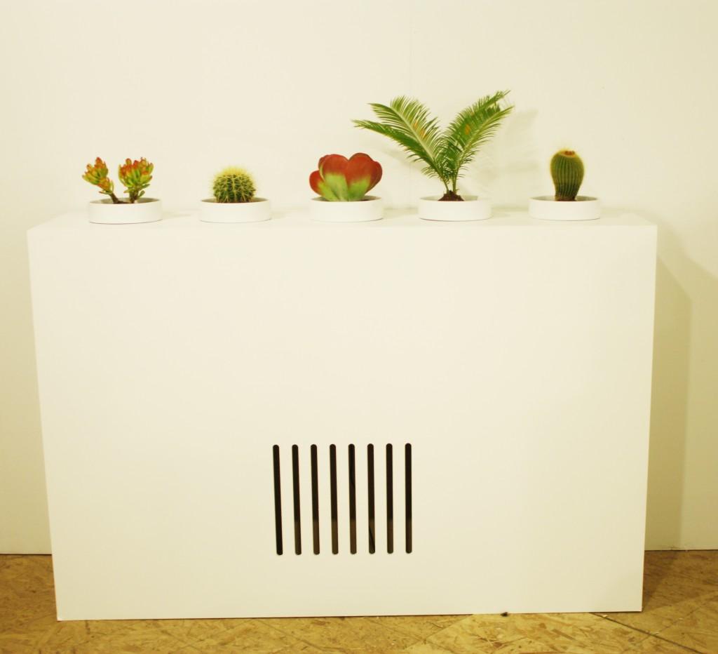 sonic succulents_2
