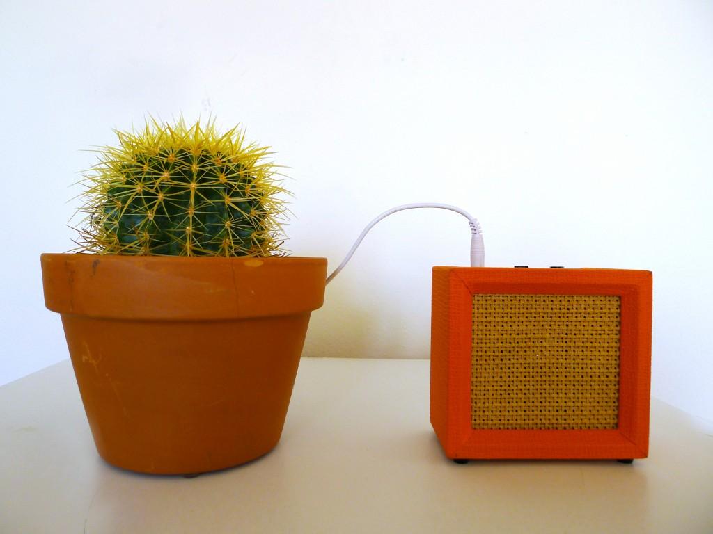 sonic succulents_3
