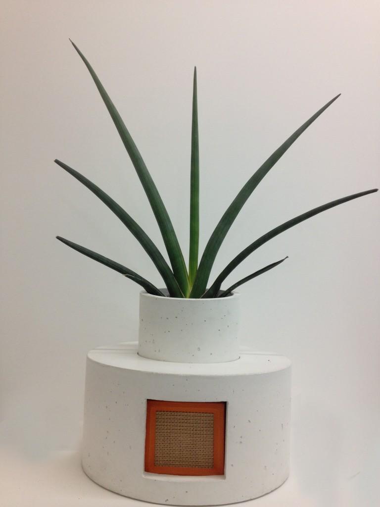 sonic succulents_4